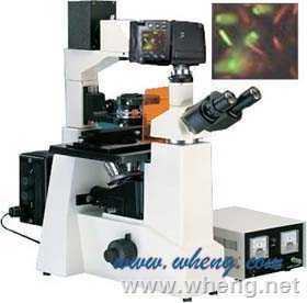 M50D萬衡 數碼型倒置熒光顯微鏡M50D